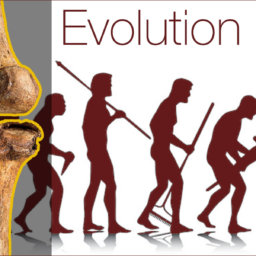 evolution of oseoarthritis