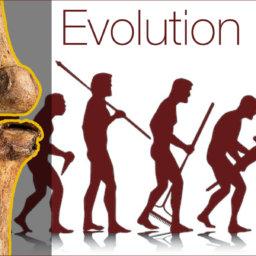 evolution of oseoarthritis