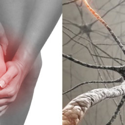 nociceptive nueropathic pain