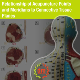 Points and Meridians to Connective Tissue Planes